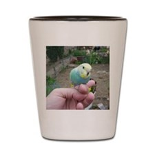 Budgie baby Shot Glass