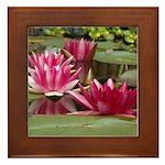 Lotus Flower Blossom Framed Tile