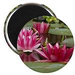 Lotus Flower Blossom Magnet
