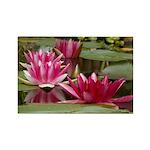 Lotus Flower Blossom Rectangle Magnet (10 pack)