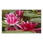 Lotus Flower Blossom Sticker (Rectangle 10 pk)