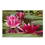 Lotus Flower Blossom Postcards (Package of 8)