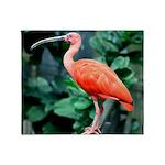 Stunning Scarlet Ibis Throw Blanket