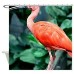 Stunning Scarlet Ibis Shower Curtain