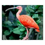 Stunning Scarlet Ibis King Duvet
