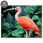 Stunning Scarlet Ibis Puzzle