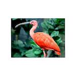 Stunning Scarlet Ibis 5'x7'Area Rug