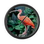 Stunning Scarlet Ibis Large Wall Clock