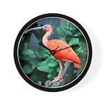 Stunning Scarlet Ibis Wall Clock