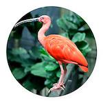Stunning Scarlet Ibis Round Car Magnet