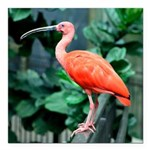 Stunning Scarlet Ibis Square Car Magnet 3