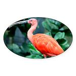 Stunning Scarlet Ibis Sticker (Oval 50 pk)