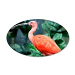Stunning Scarlet Ibis 20x12 Oval Wall Decal
