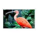 Stunning Scarlet Ibis 20x12 Wall Decal