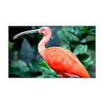 Stunning Scarlet Ibis 35x21 Wall Decal