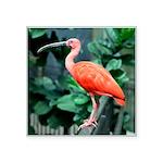 Stunning Scarlet Ibis Square Sticker 3