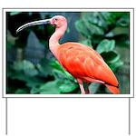 Stunning Scarlet Ibis Yard Sign