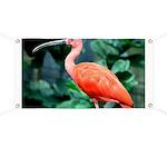 Stunning Scarlet Ibis Banner