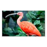 Stunning Scarlet Ibis Sticker (Rectangle)