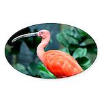 Stunning Scarlet Ibis Sticker (Oval)