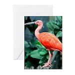 Stunning Scarlet Ibis Greeting Cards (Pk of 10)