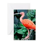 Stunning Scarlet Ibis Greeting Card