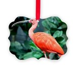 Stunning Scarlet Ibis Picture Ornament
