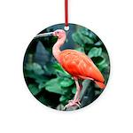 Stunning Scarlet Ibis Ornament (Round)