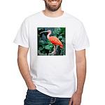 Stunning Scarlet Ibis White T-Shirt