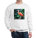 Stunning Scarlet Ibis Sweatshirt