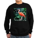 Stunning Scarlet Ibis Sweatshirt (dark)