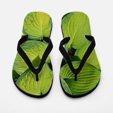 Botanical Flip Flops