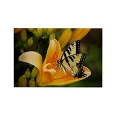 Swallowtail Butterfly Rectangle Magnet