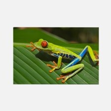 Cute Red eyed tree frog kids Rectangle Magnet