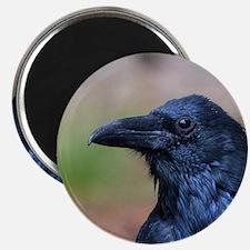 Portrait of a Raven Magnet