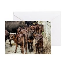 Beef Calves Watercolor Greeting Cards