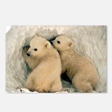 Polar Bear Cubs in the Sn Postcards (Package of 8)