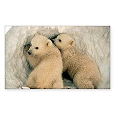 Polar Bear Cubs in the Snow Decal