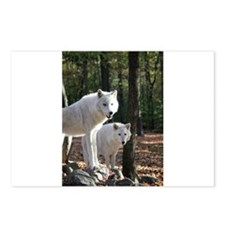 White Wolves Postcards (Package of 8)