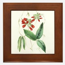 Paxton's Clitoria fulgens Framed Tile
