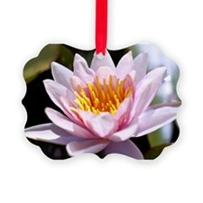 Pink Water Lily Ornament