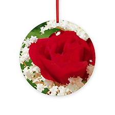 rote rose in weißen blüten Round Ornament