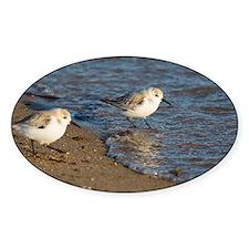 Sanderlings Decal