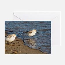 Sanderlings Greeting Card