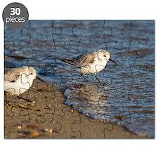 Sanderlings Puzzle