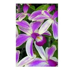 Hawaiian Orchids Postcards (Package of 8)