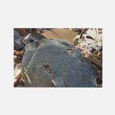 Mommy and Baby Quail Rectangle Magnet