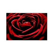 Single Red Rose Rectangle Magnet