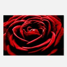 Single Red Rose Postcards (Package of 8)
