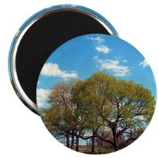 Nature Magnet